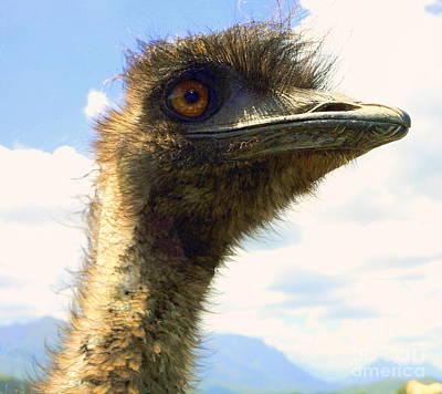 Photograph - Ostrich Head Shot by Rachel Munoz Striggow