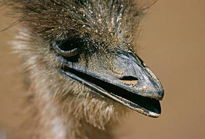 Ostrich Wall Art - Photograph - Ostrich by Philippe Psaila/science Photo Library