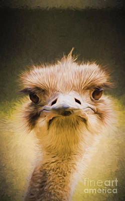 Ostrich Digital Art - Ostrich by Avalon Fine Art Photography