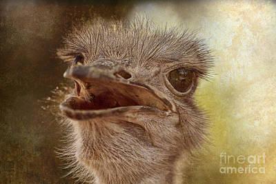 Ostrich Photograph - Ostrich Texture by Douglas Barnard