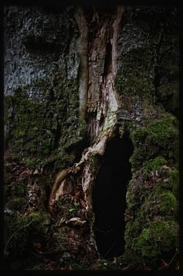 Gnarly Photograph - Otherland by Odd Jeppesen