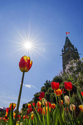Lucille Ball - Ottawa Tulip Festival by Mircea Costina Photography