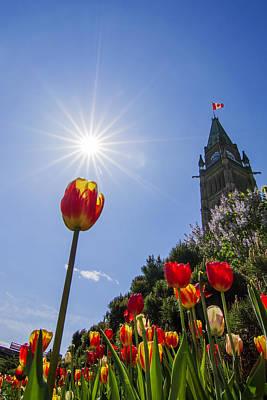 Canadian Parliament Photograph - Ottawa Tulip Festival by Mircea Costina Photography