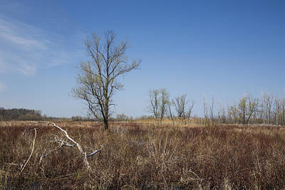 Photograph - Ottawa Wildlife Refuge by Dale Kincaid