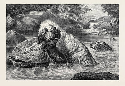 Otter Drawing - Otter Hounds, 1873 by Bradley, Basil (1842-1904), English