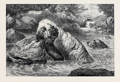 Otter Drawing - Otter Hounds, 1873 by Bradley, Basil (1842-1904), English