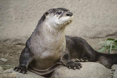 Otter Photograph - Otter North American  by LeeAnn McLaneGoetz McLaneGoetzStudioLLCcom