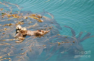 Photograph - Otter Snooze by Johanne Peale