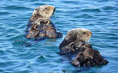Photograph - Otter Twins by AJ  Schibig