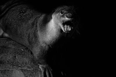 Otter Photograph - Otter Wars by Martin Newman