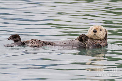Photograph - Otterly Adorable by Chris Scroggins