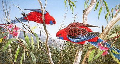 Painting - Our Beautiful Home - Crimson Rosellas by Frances McMahon