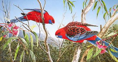 Our Beautiful Home - Crimson Rosellas Art Print