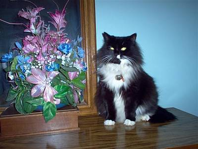 Photograph - Our Cat Meimei by Christine McMillan