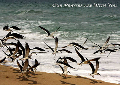 Photograph - Our Prayers Are With You by Dawn Currie