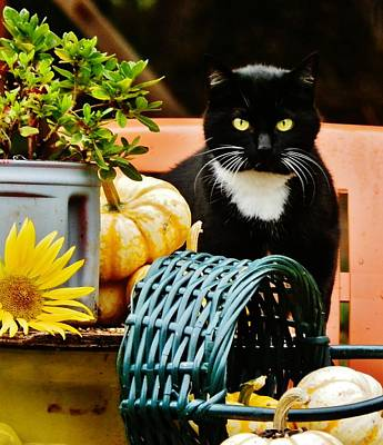 Photograph - Our Tuxedo In Fall by VLee Watson