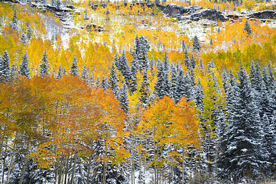 Photograph - Ouray Fall Color by Ray Mathis