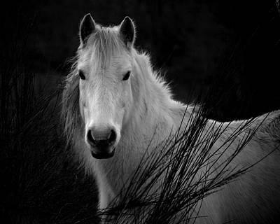 Photograph - Oushi by Gavin Macrae