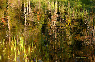 Photograph - Out In The Reeds by Donna Blackhall