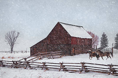 Photograph - Out In The Snow by Priscilla Burgers