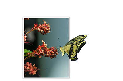 Creative Manipulation Photograph - Out Of Frame Butterfly by Ginger Harris