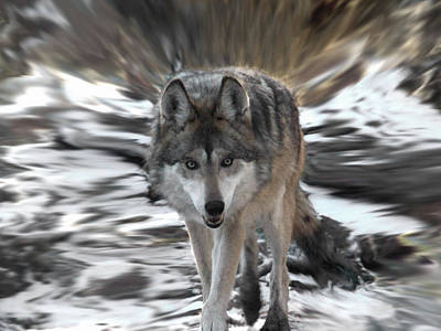Wild Wolf Mixed Media - Out Of Nowhere by Ernie Echols
