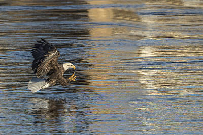 Eagle Photograph - Out Of The Blue And Into The Blue  by Thomas Young