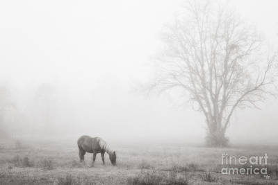 South Louisiana Photograph - Out Of The Fog by Scott Pellegrin