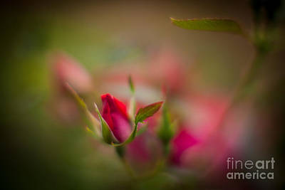 Floribunda Photograph - Out Of The Mist by Mike Reid