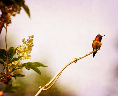 Art Print featuring the photograph Out On A Limb by Peggy Collins