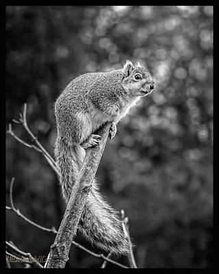 Detroit Photograph - Out On A Limb Squirrel by LeeAnn McLaneGoetz McLaneGoetzStudioLLCcom