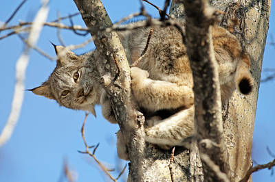 Photograph - Out On A Limb by Ted Raynor