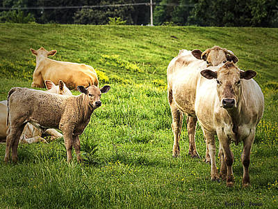 Photograph - Out To Pasture by Barry Jones
