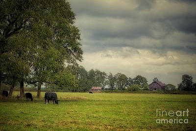 Out To Pasture Art Print by Belinda Greb