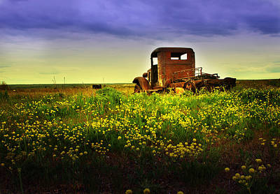 Photograph - Out To Pasture by Sonya Lang