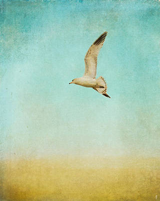 Out To Sea - Wildlife - Seagull Art Print by Jai Johnson