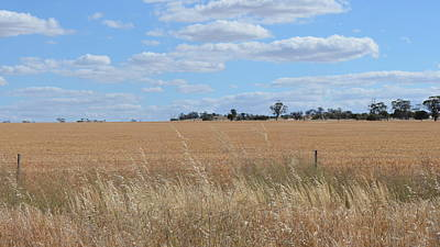 Photograph - Outback  by Cheryl Miller