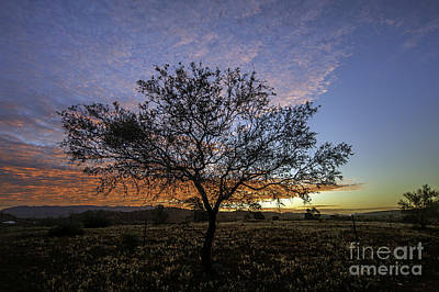 Photograph - Outback Sunset  by Ray Warren