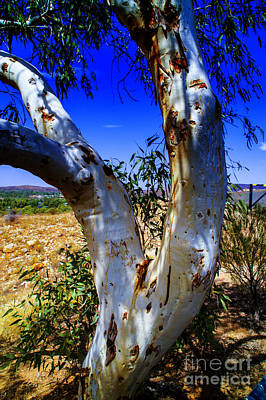 Photograph - Outback Tree by Rick Bragan