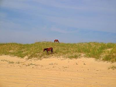 Photograph - Outer Banks Wild Horses by Chris Montcalmo