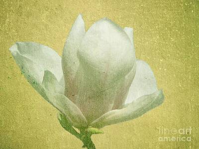 Photograph - Outer Magnolia by Jeff Kolker