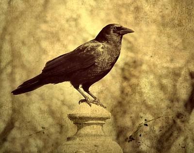 Ravens In Graveyard Photograph - The Raven's Outlook by Gothicrow Images