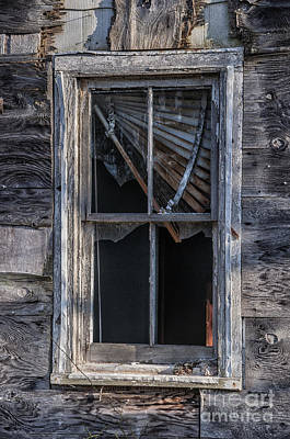 Photograph - Outside Looking In by Terry Rowe