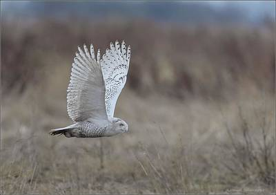 Photograph - Outstretched Wings by Daniel Behm