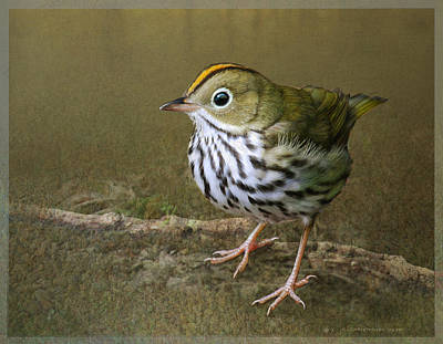 Warbler Digital Art - Ovenbird On Soft Ground by R christopher Vest