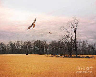 Red Tail Hawk Photograph - Over Fields Of Gold by Jai Johnson