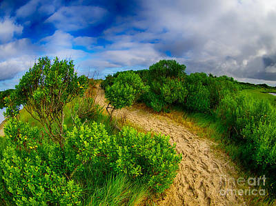 Photograph - Over The Beaten Path by Mark Miller