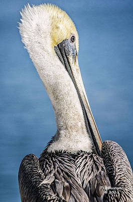 Photograph - Over The Shoulder Pelican by Peg Runyan
