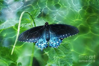 Blue Swallowtail Photograph - Over The Water - Nature Abstract by Carol Groenen