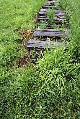 Photograph - Overgrown Grass And Fence by Harold E McCray